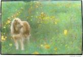 Brunhilda in the Grass