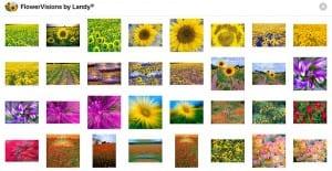 Flowervisions IOS Stickers Elliott Landy